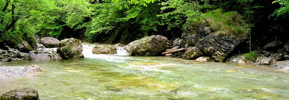 Slovenia, il fiume iška - salmonidi