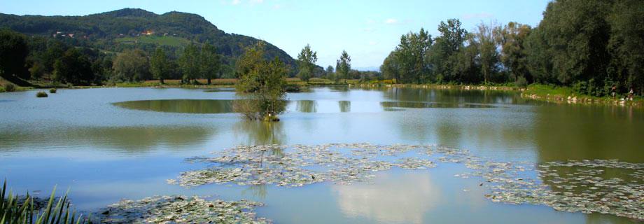 ribnik-prilipe-ribiska-druzina-brezice-prikazna.jpg
