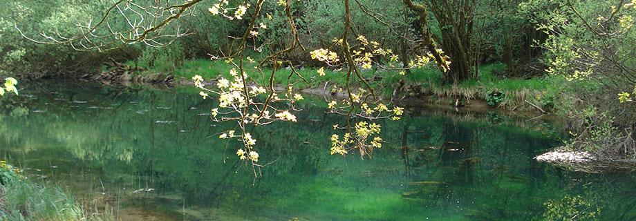 Reka Bistrica