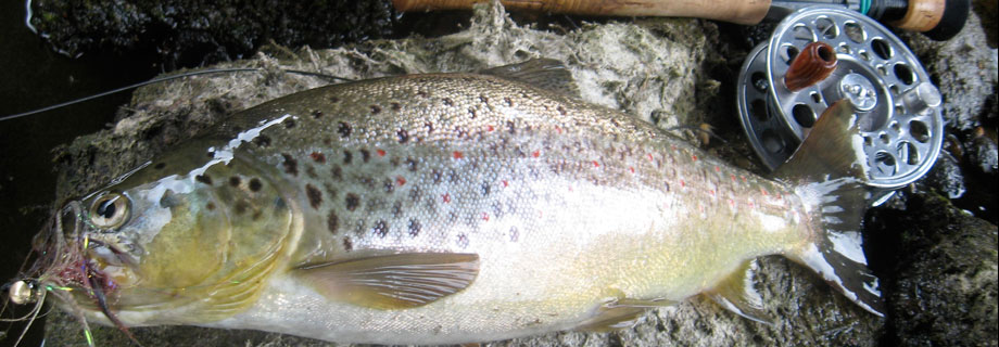 Gruberjev prekop (33)